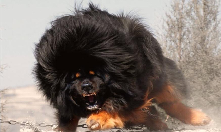 Τι πρέπει να γνωρίζω αν συναντήσω άγριο σκύλο στην πορεία μου;