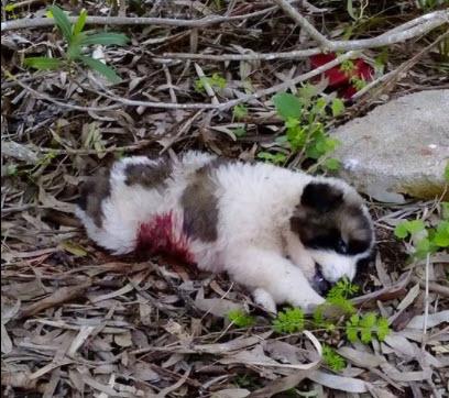 Σχηματισμός δικογραφίας σε βάρος άγνωστου δράστη για θανάτωση ζώων