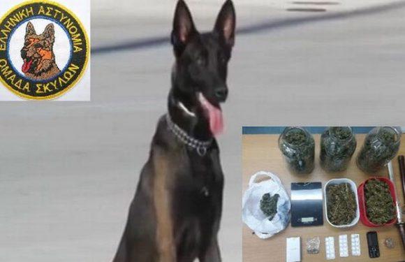 Έναν ακόμα έμπορο ναρκωτικών εντόπισε ο αστυνομικός σκύλος «Ρίκι»