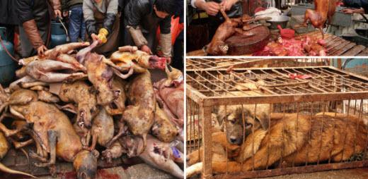 Η Σενζεν εγινε η πρωτη κινεζικη πολη που απαγορευει την καταναλωση γατων και σκυλων